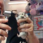 Krankheiten beim Hamster