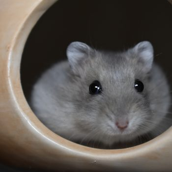 Allgemeine Vermittlungsbedingungen für Hamster